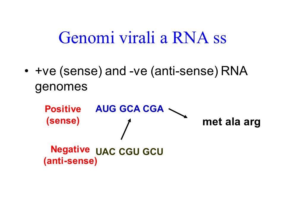 Genoma di HCV