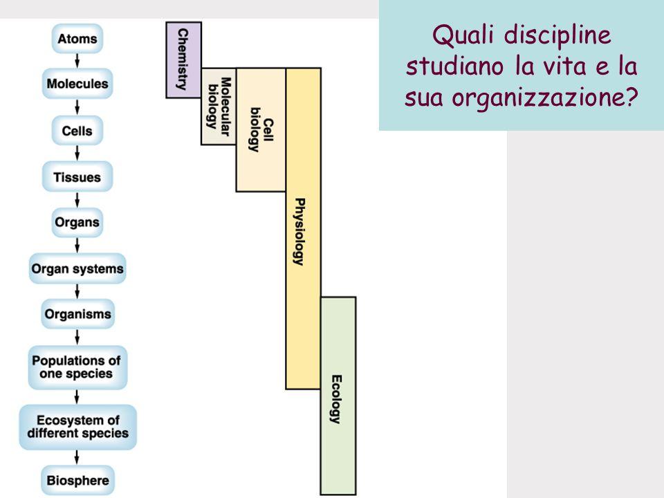 Quali discipline studiano la vita e la sua organizzazione?
