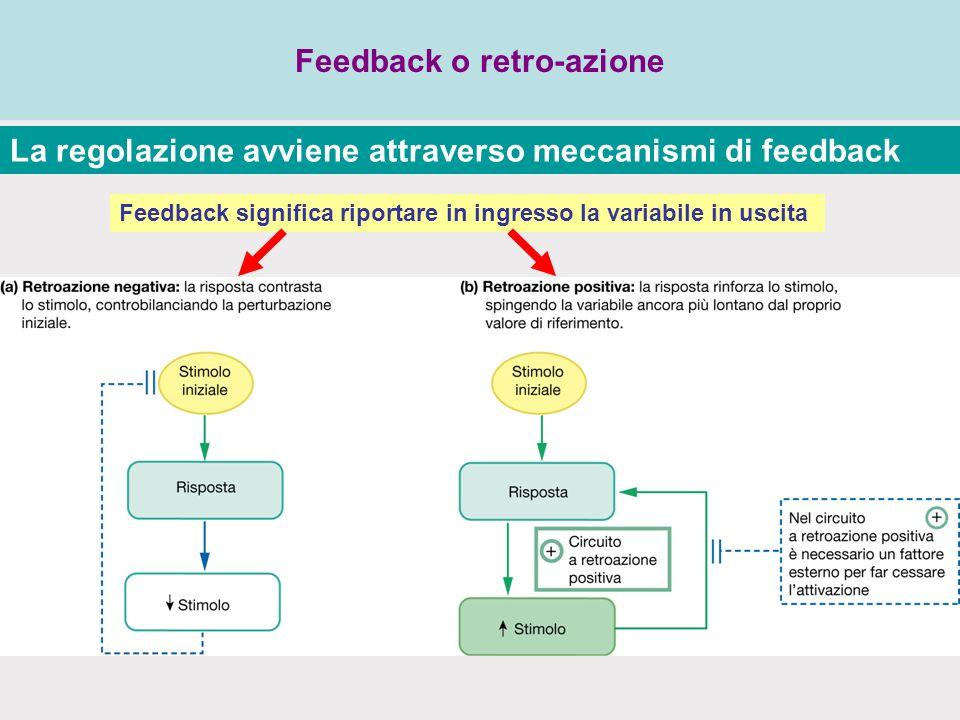Feedback o retro-azione La regolazione avviene attraverso meccanismi di feedback Feedback significa riportare in ingresso la variabile in uscita