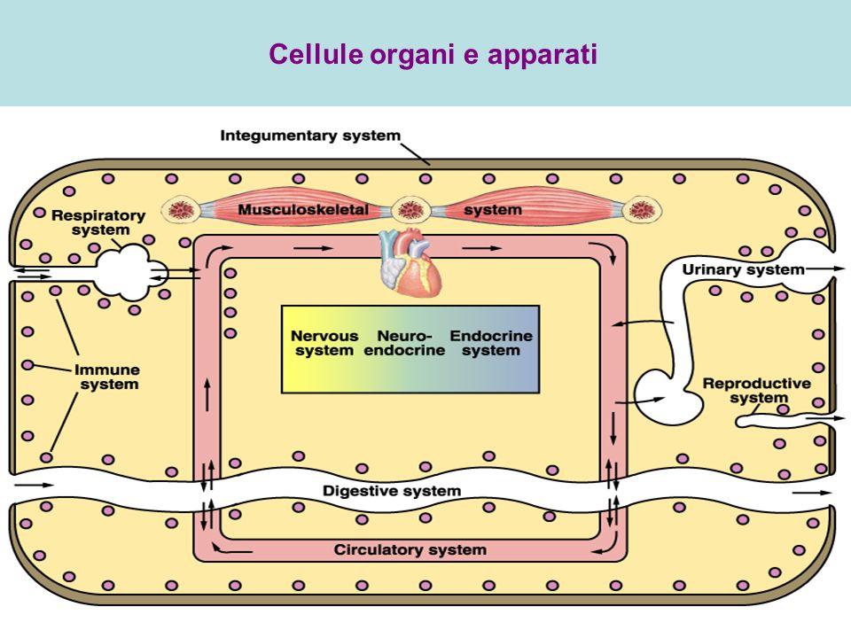 Cellule organi e apparati
