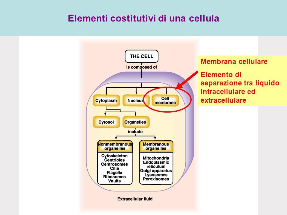 Elementi costitutivi di una cellula Membrana cellulare Elemento di separazione tra liquido intracellulare ed extracellulare