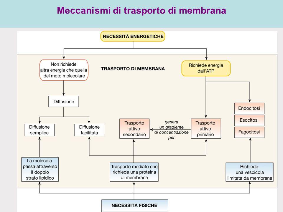 Meccanismi di trasporto di membrana