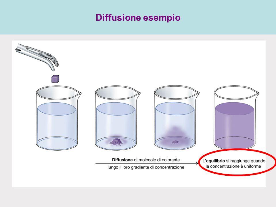 Diffusione esempio