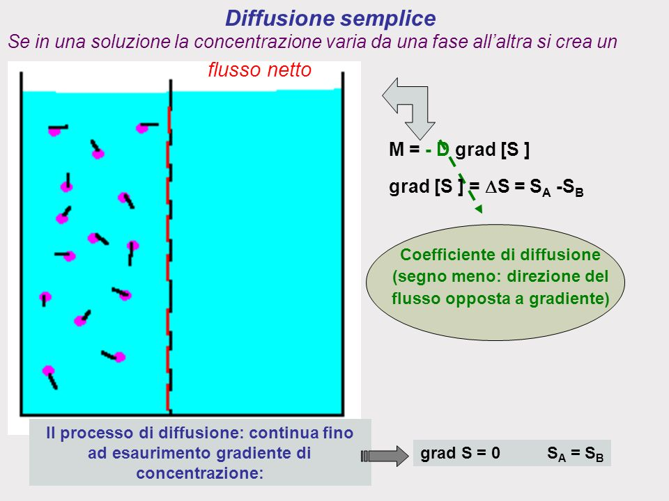 Diffusione semplice grad [S ] = S = S A -S B M = - D grad [S ] Coefficiente di diffusione (segno meno: direzione del flusso opposta a gradiente) Il processo di diffusione: continua fino ad esaurimento gradiente di concentrazione: grad S = 0 S A = S B Se in una soluzione la concentrazione varia da una fase allaltra si crea un flusso netto