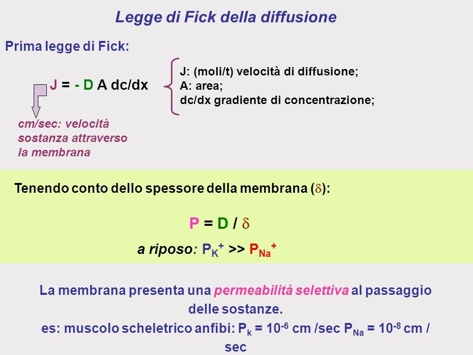Legge di Fick della diffusione Tenendo conto dello spessore della membrana ( ): P = D / a riposo: P K + >> P Na + La membrana presenta una permeabilità selettiva al passaggio delle sostanze.