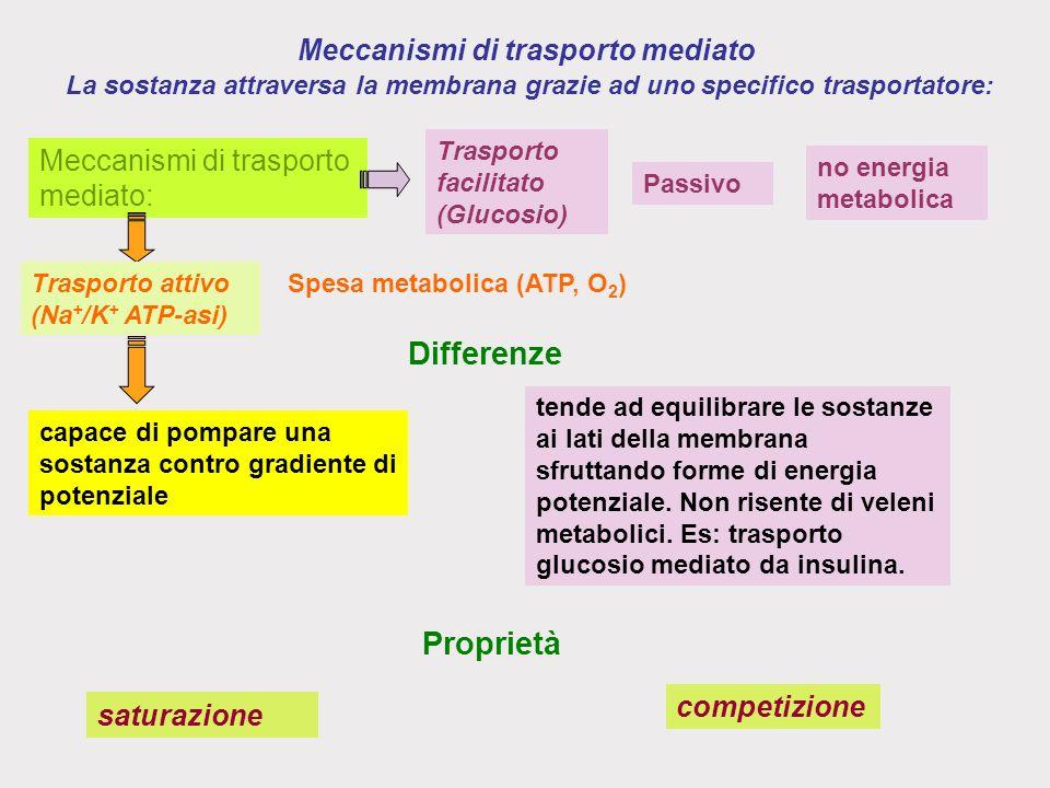 Meccanismi di trasporto mediato La sostanza attraversa la membrana grazie ad uno specifico trasportatore: tende ad equilibrare le sostanze ai lati della membrana sfruttando forme di energia potenziale.