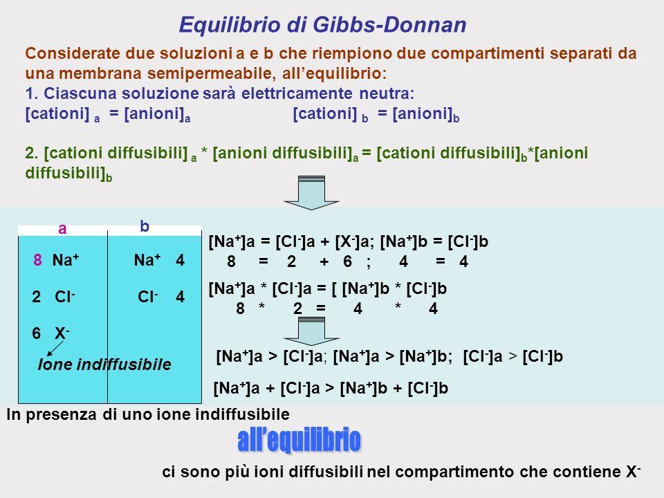Equilibrio di Gibbs-Donnan Na + Cl - X-X- Na + Cl - Ione indiffusibile 8 6 24 4 [Na + ]a = [Cl - ]a + [X - ]a; [Na + ]b = [Cl - ]b 8 = 2 + 6 ; 4 = 4 [Na + ]a * [Cl - ]a = [ [Na + ]b * [Cl - ]b 8 * 2 = 4 * 4 [Na + ]a > [Cl - ]a; [Na + ]a > [Na + ]b; [Cl - ]a > [Cl - ]b [Na + ]a + [Cl - ]a > [Na + ]b + [Cl - ]b a b Considerate due soluzioni a e b che riempiono due compartimenti separati da una membrana semipermeabile, allequilibrio: 1.