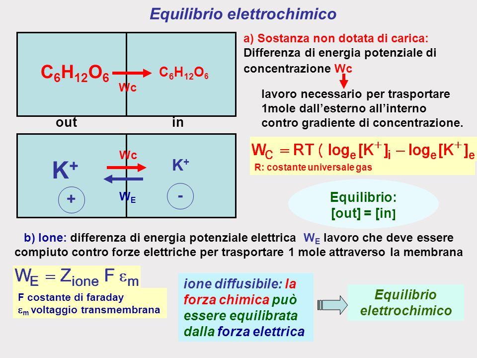 Equilibrio elettrochimico ione diffusibile: la forza chimica può essere equilibrata dalla forza elettrica Equilibrio elettrochimico Equilibrio: [out] = [in ] R: costante universale gas lavoro necessario per trasportare 1mole dallesterno allinterno contro gradiente di concentrazione.
