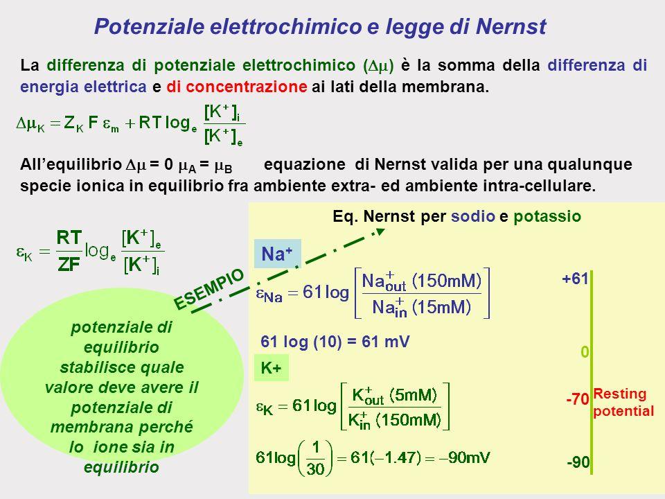 Potenziale elettrochimico e legge di Nernst La differenza di potenziale elettrochimico ( ) è la somma della differenza di energia elettrica e di concentrazione ai lati della membrana.
