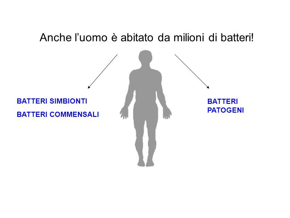 Batteri eterotrofi: si nutrono di composti organici Batteri autotrofi: sintetizzano autonomamente composti organici a partire da composti inorganici Classificazione dei batteri sulla base del nutrimento