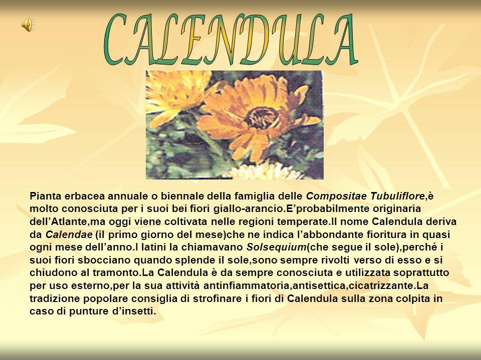 Pianta erbacea annuale o biennale della famiglia delle Compositae Tubuliflore,è molto conosciuta per i suoi bei fiori giallo-arancio.Eprobabilmente or