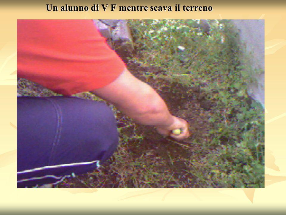 Un alunno di V F mentre scava il terreno