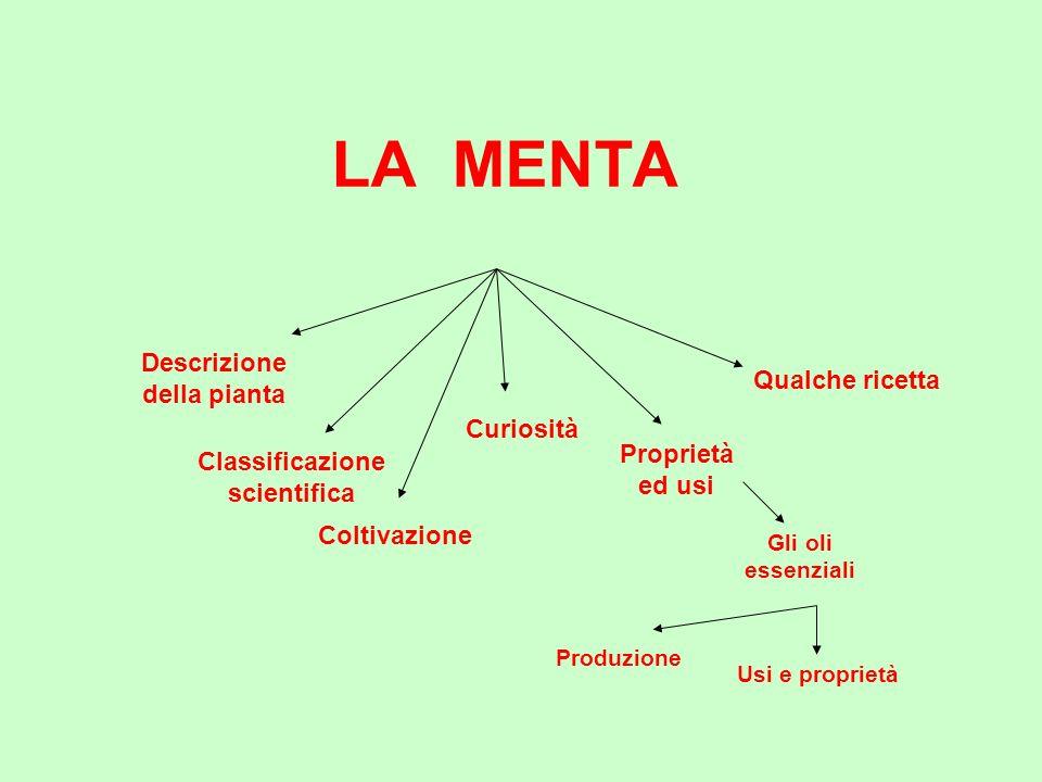 La Menta (genere Mentha) è una pianta erbacea perenne, stolonifera, fortemente aromatica, che appartiene alla famiglia delle Labiate (Lamiaceae).