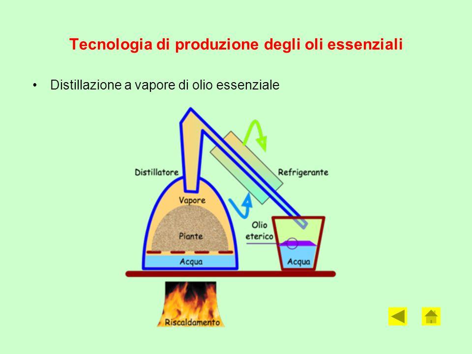Tecnologia di produzione degli oli essenziali Distillazione a vapore di olio essenziale
