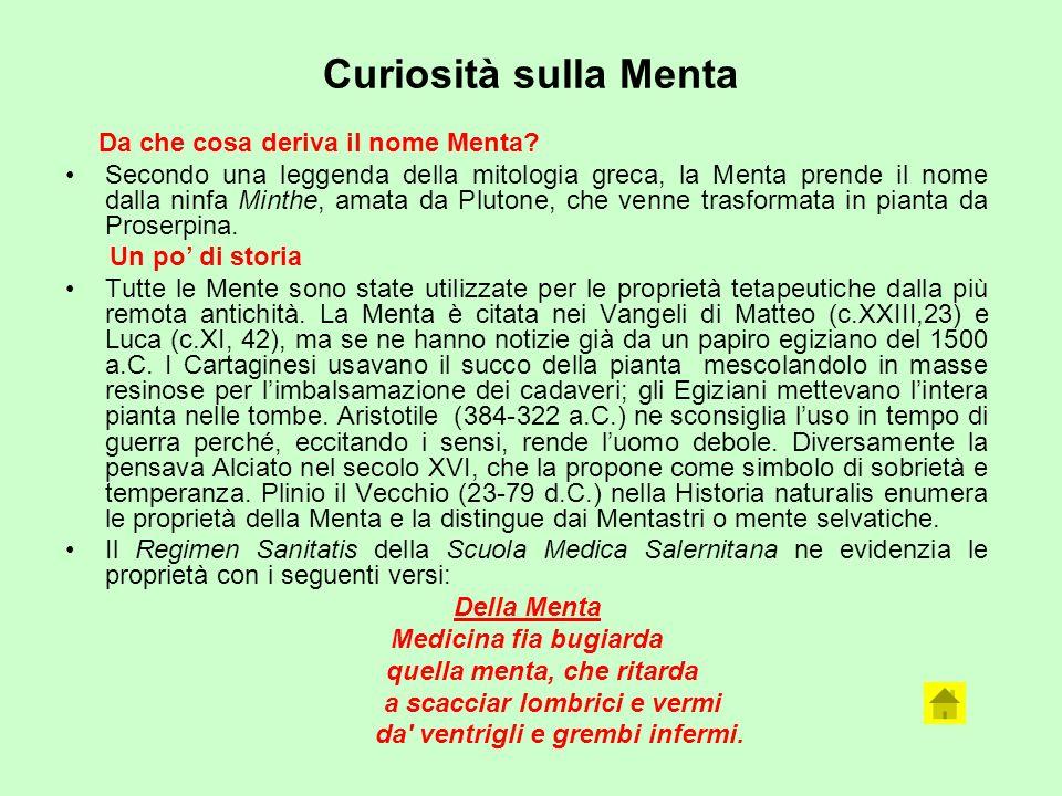 Curiosità sulla Menta Da che cosa deriva il nome Menta? Secondo una leggenda della mitologia greca, la Menta prende il nome dalla ninfa Minthe, amata