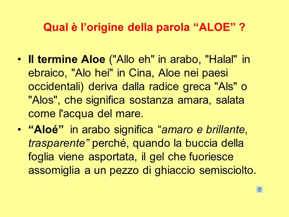 Qual è lorigine della parola ALOE ? Il termine Aloe (