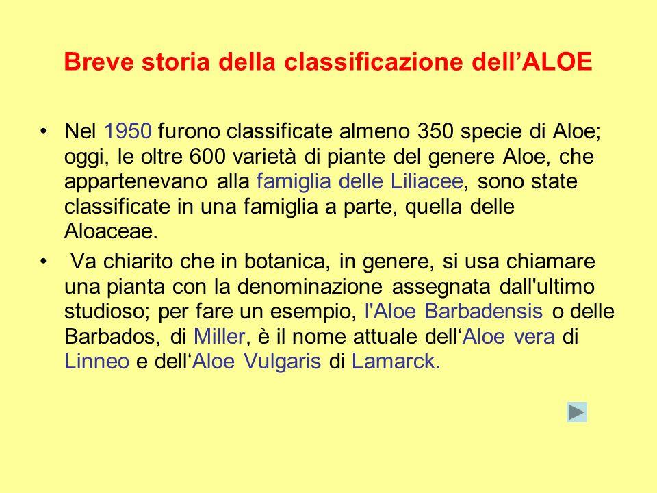 Breve storia della classificazione dellALOE Nel 1950 furono classificate almeno 350 specie di Aloe; oggi, le oltre 600 varietà di piante del genere Al