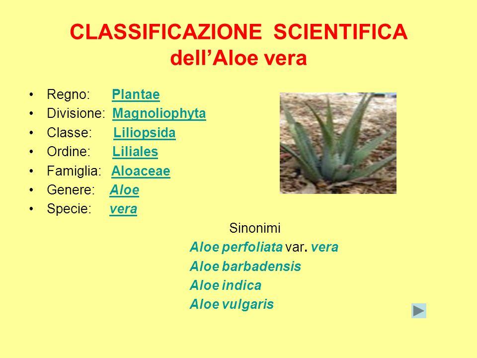 CLASSIFICAZIONE SCIENTIFICA dellAloe vera Regno: PlantaePlantae Divisione: MagnoliophytaMagnoliophyta Classe: LiliopsidaLiliopsida Ordine: LilialesLil