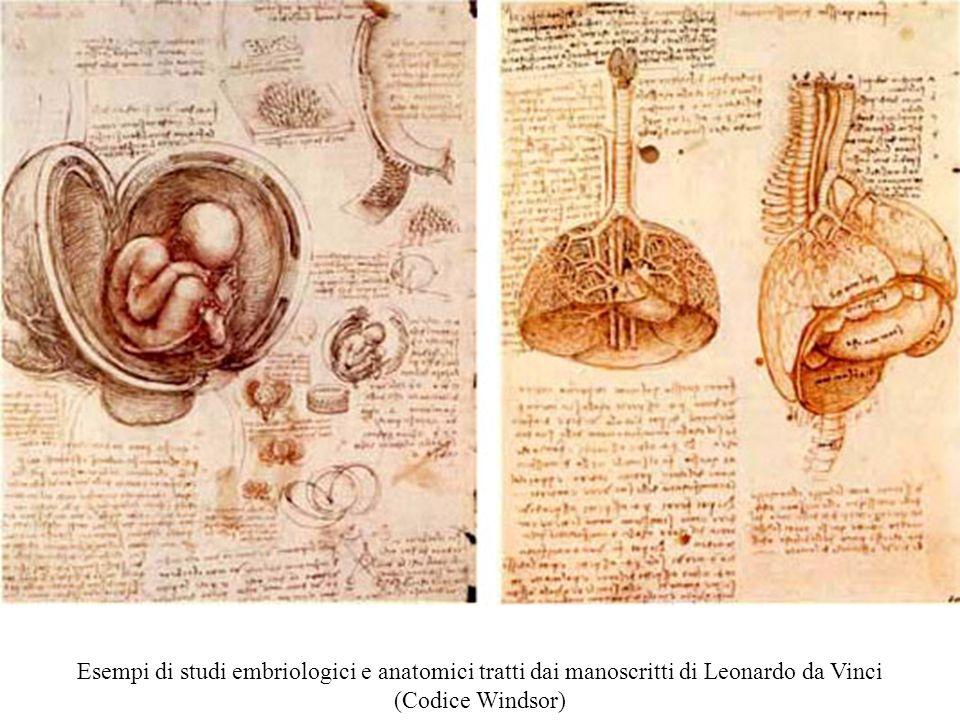 Esempi di studi embriologici e anatomici tratti dai manoscritti di Leonardo da Vinci (Codice Windsor)