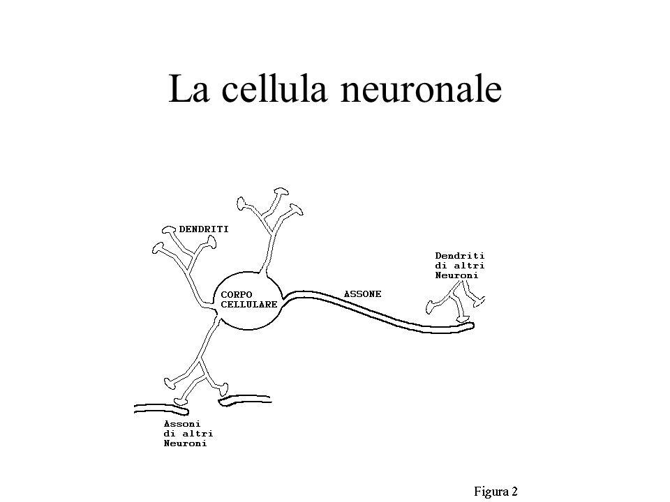 La cellula neuronale