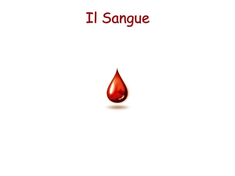 Il sangue nell organismo ha le seguenti funzioni: aiuta a regolare la temperatura del corpo.