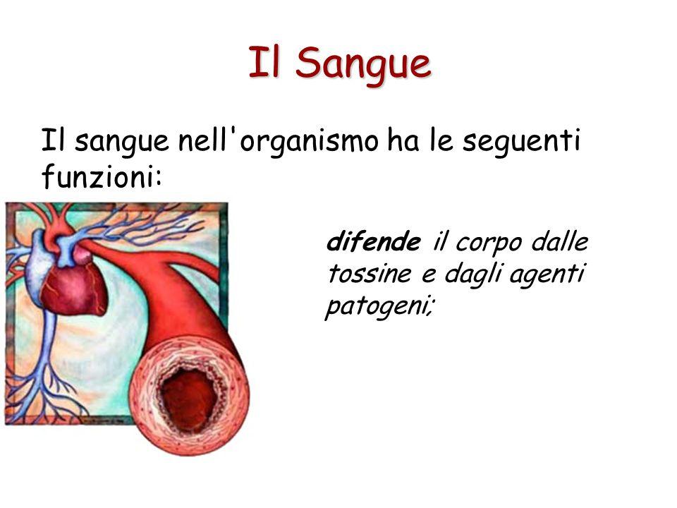Il sangue nell'organismo ha le seguenti funzioni: riduce le perdite dei liquidi attraverso i vasi danneggiati o ad altri lesionati (coagulazione); Il