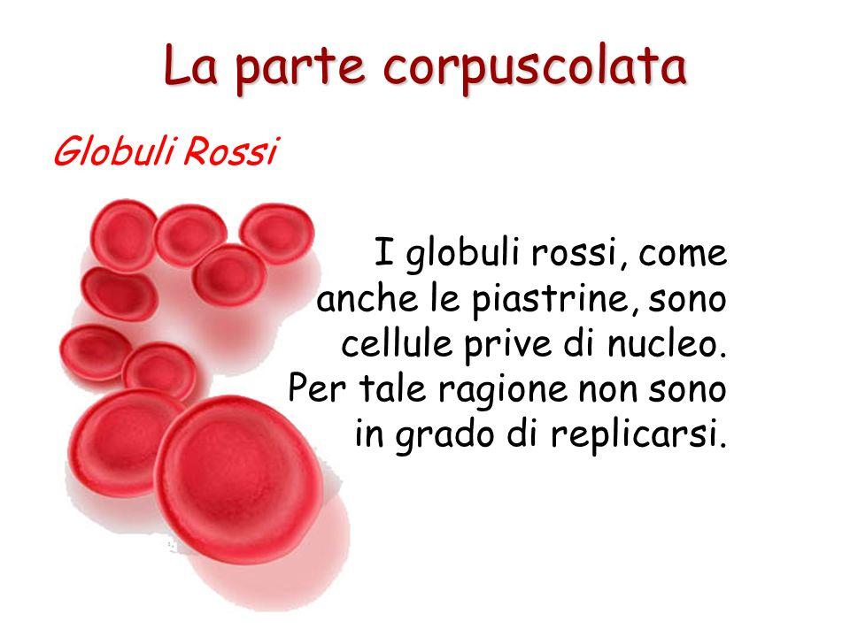 Il sangue non ossigenato invece, è di colore marrone- rosso scuro, ma appare bluastro attraverso la pelle. Globuli Rossi La parte corpuscolata