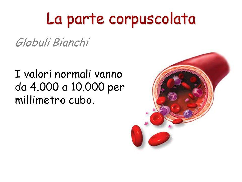 Si formano come i globuli rossi nel midollo osseo, ma anche da altri organi come le ghiandole linfatiche e la milza. La parte corpuscolata Globuli Bia