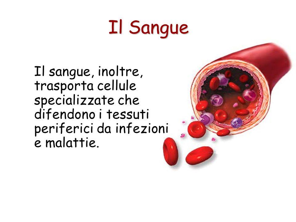 Il sangue, inoltre, trasporta cellule specializzate che difendono i tessuti periferici da infezioni e malattie.