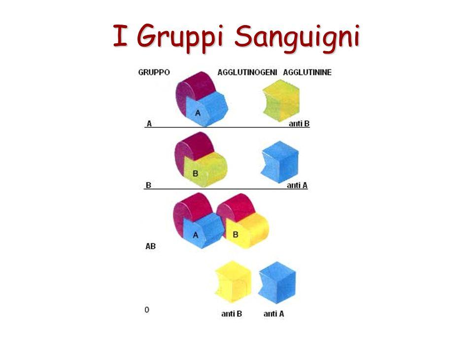 Sulla base di queste scoperte, nella specie umana vennero individuati tre gruppi chiamati A, B, O (zero). Nel 1902 venne scoperto un quarto gruppo che