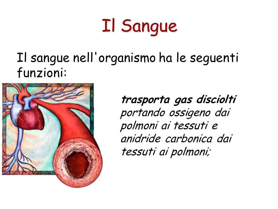 Il sangue nell organismo ha le seguenti funzioni: trasporta gas disciolti portando ossigeno dai polmoni ai tessuti e anidride carbonica dai tessuti ai polmoni; Il Sangue