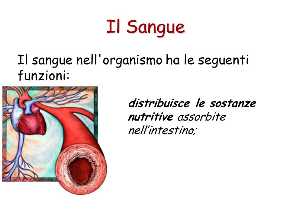 Il sangue nell'organismo ha le seguenti funzioni: trasporta gas disciolti portando ossigeno dai polmoni ai tessuti e anidride carbonica dai tessuti ai