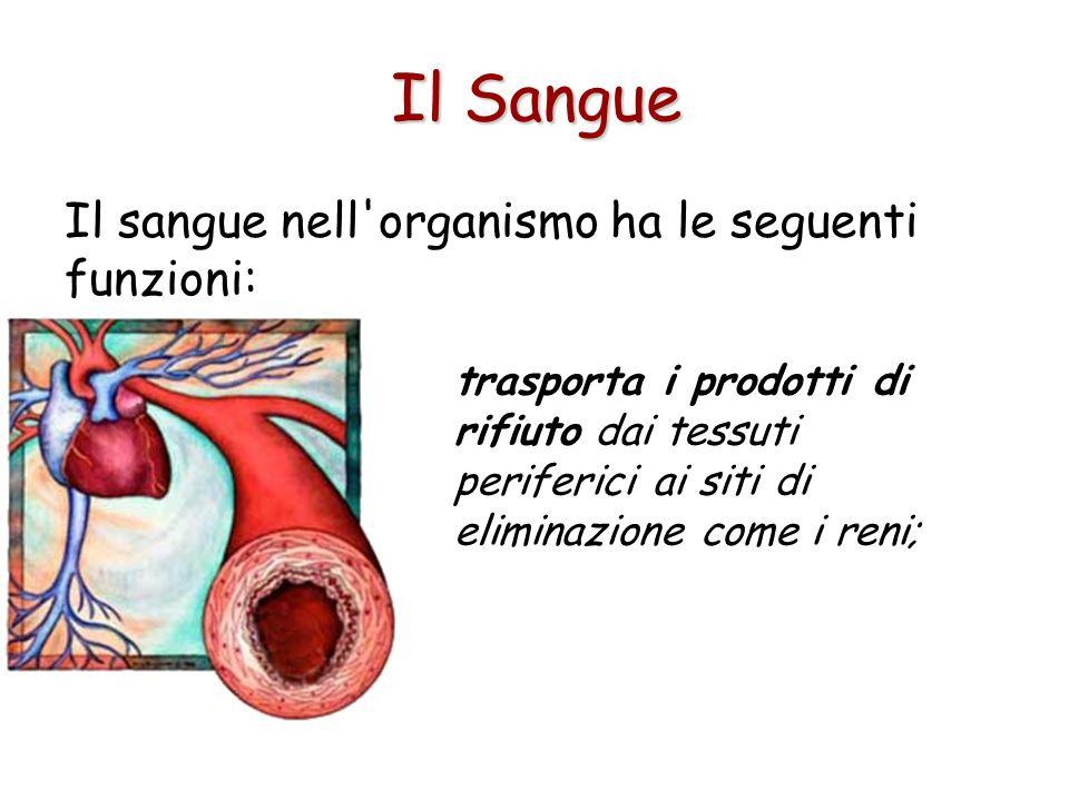 Il sangue nell organismo ha le seguenti funzioni: trasporta i prodotti di rifiuto dai tessuti periferici ai siti di eliminazione come i reni; Il Sangue