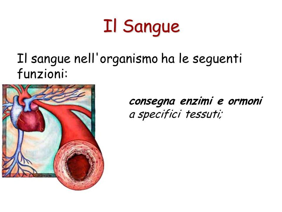 Il sangue nell organismo ha le seguenti funzioni: consegna enzimi e ormoni a specifici tessuti; Il Sangue