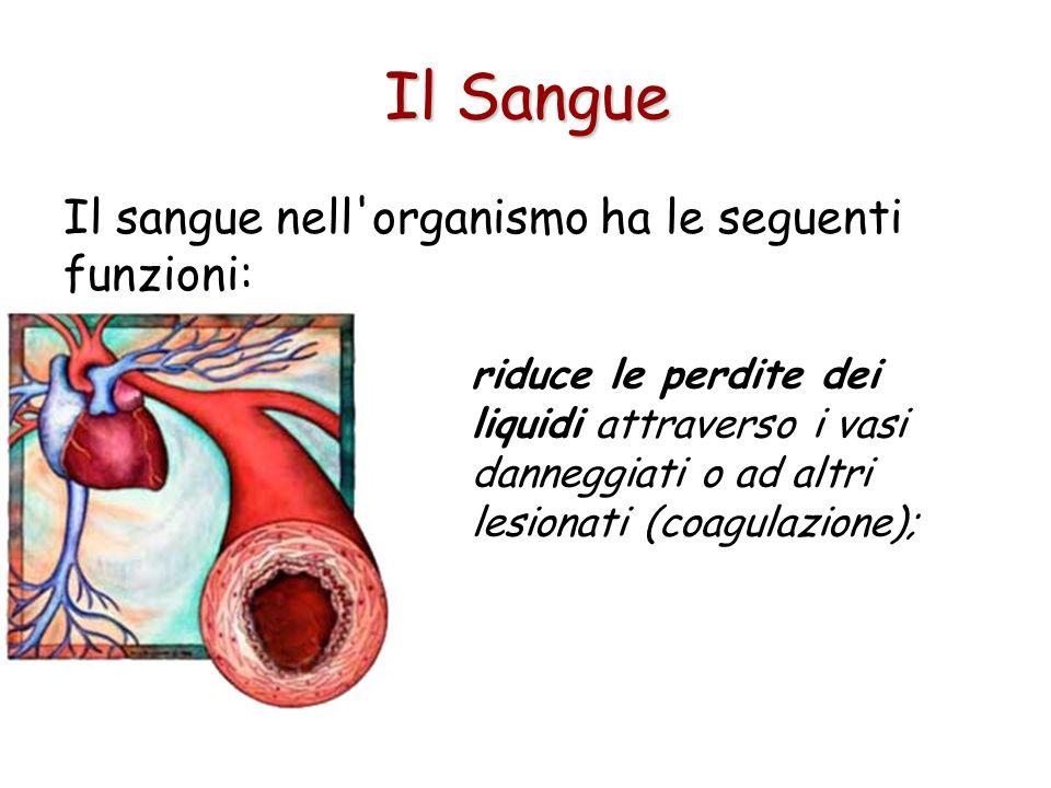 Il sangue nell organismo ha le seguenti funzioni: riduce le perdite dei liquidi attraverso i vasi danneggiati o ad altri lesionati (coagulazione); Il Sangue