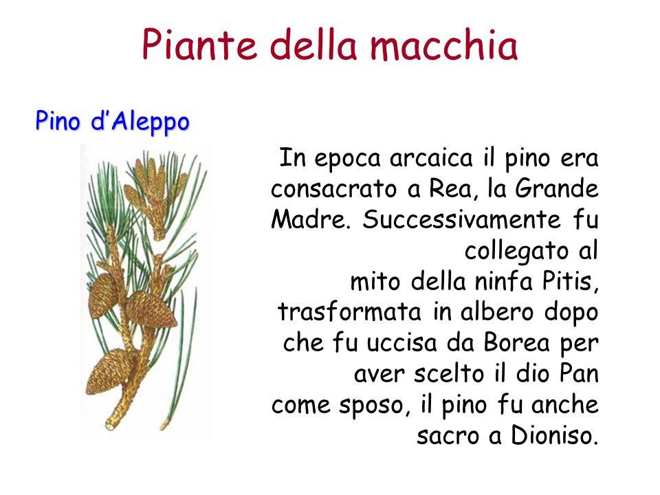 Pino dAleppo In epoca arcaica il pino era consacrato a Rea, la Grande Madre. Successivamente fu collegato al mito della ninfa Pitis, trasformata in al