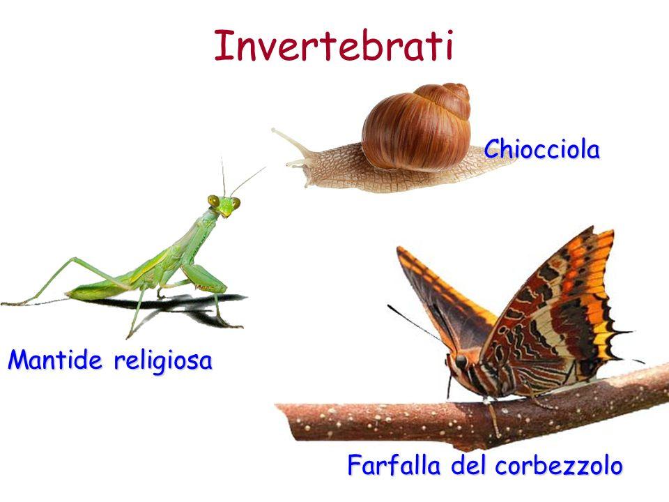 Farfalla del corbezzolo Invertebrati Mantide religiosa Chiocciola