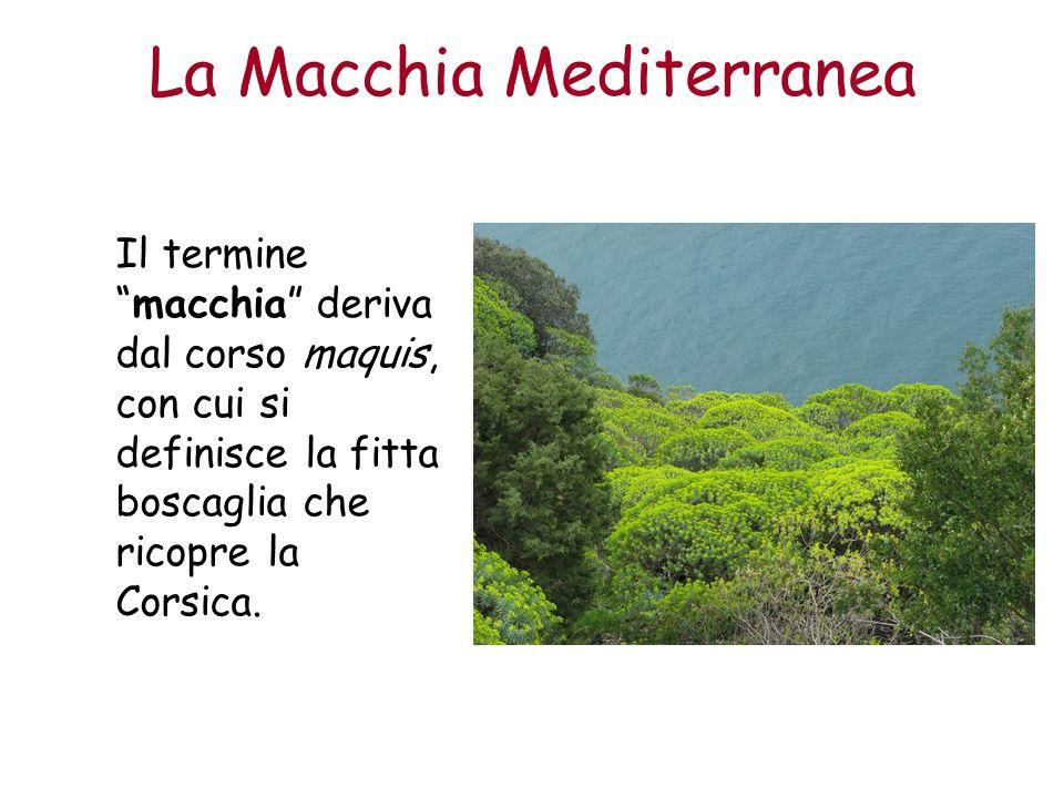 La Macchia Mediterranea Il terminemacchia deriva dal corso maquis, con cui si definisce la fitta boscaglia che ricopre la Corsica.