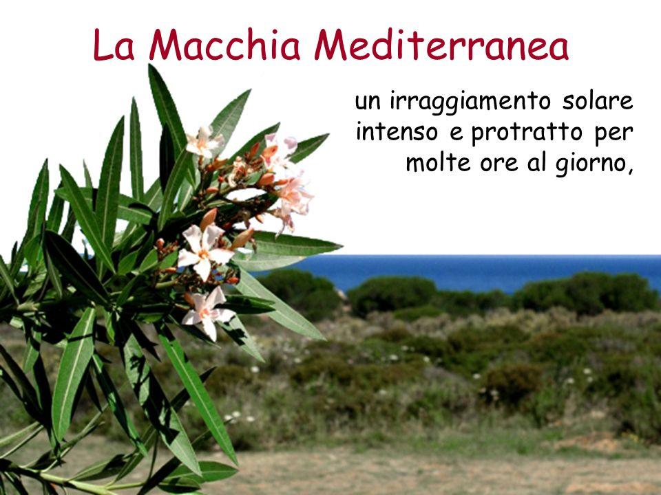 La Macchia Mediterranea un irraggiamento solare intenso e protratto per molte ore al giorno,