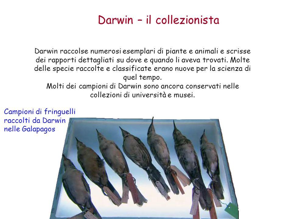 Darwin – il collezionista Darwin raccolse numerosi esemplari di piante e animali e scrisse dei rapporti dettagliati su dove e quando li aveva trovati.