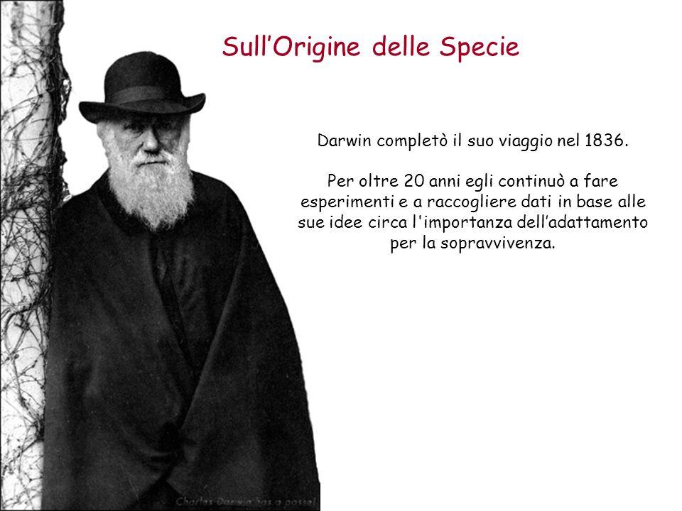 SullOrigine delle Specie Darwin completò il suo viaggio nel 1836. Per oltre 20 anni egli continuò a fare esperimenti e a raccogliere dati in base alle