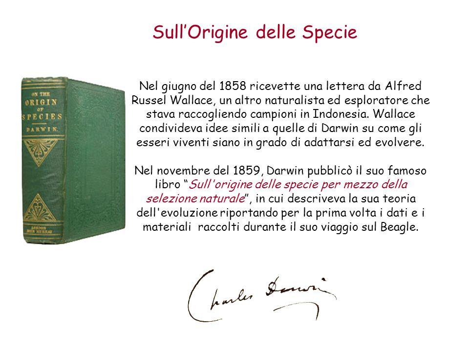 SullOrigine delle Specie Nel giugno del 1858 ricevette una lettera da Alfred Russel Wallace, un altro naturalista ed esploratore che stava raccogliend