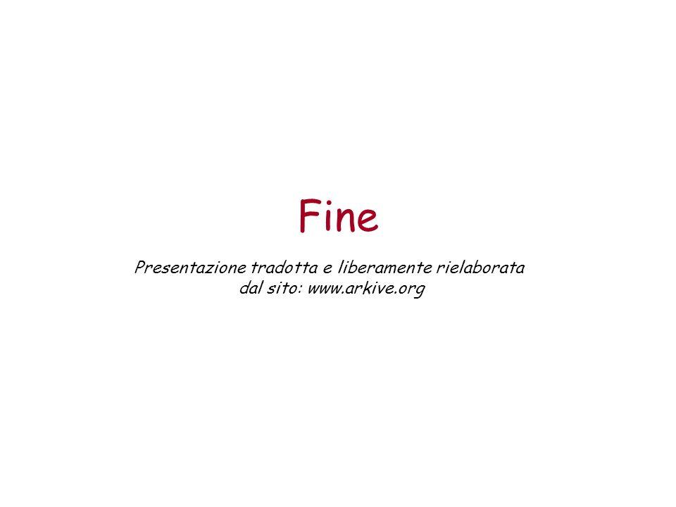 Fine Presentazione tradotta e liberamente rielaborata dal sito: www.arkive.org