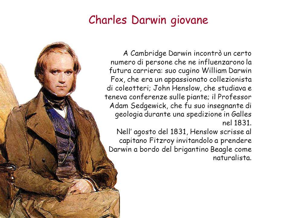 Charles Darwin giovane A Cambridge Darwin incontrò un certo numero di persone che ne influenzarono la futura carriera: suo cugino William Darwin Fox,