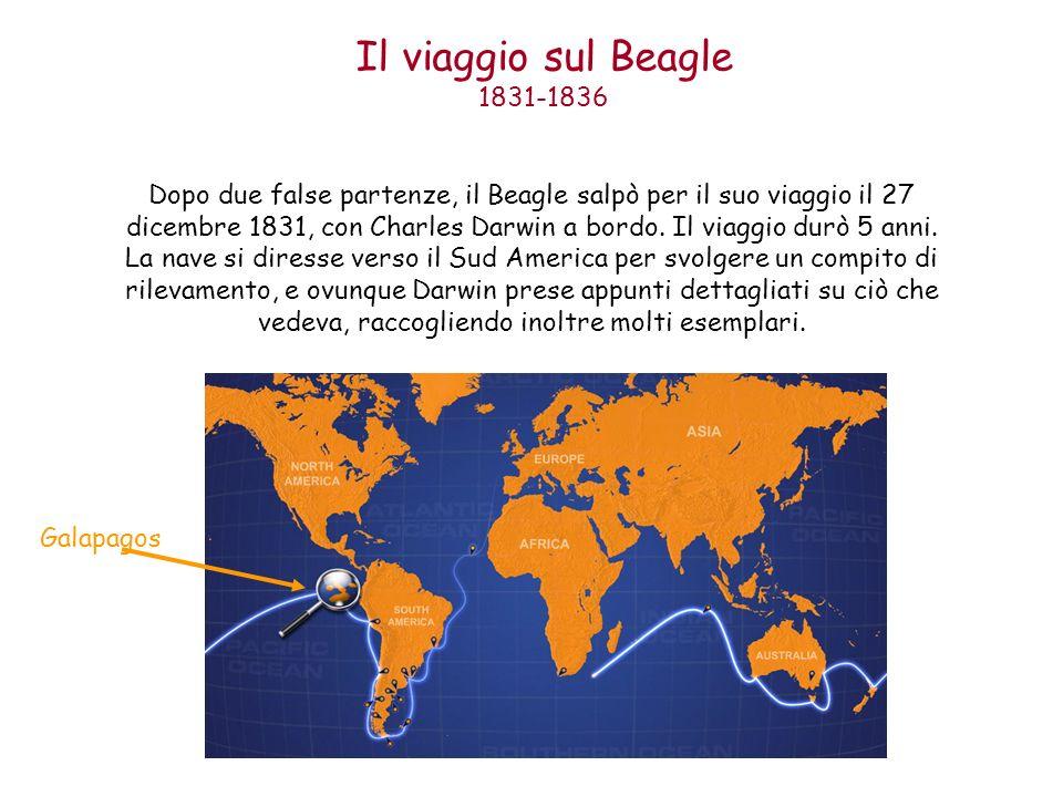 Il viaggio sul Beagle 1831-1836 Dopo due false partenze, il Beagle salpò per il suo viaggio il 27 dicembre 1831, con Charles Darwin a bordo. Il viaggi