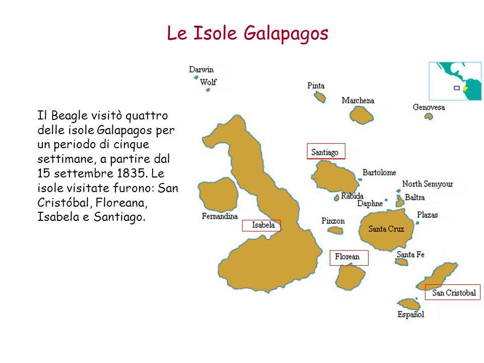 Le Isole Galapagos Il Beagle visitò quattro delle isole Galapagos per un periodo di cinque settimane, a partire dal 15 settembre 1835. Le isole visita