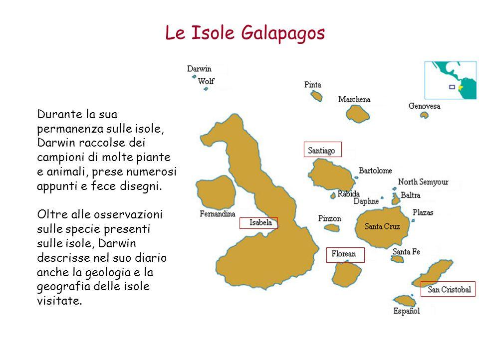 Le Isole Galapagos Durante la sua permanenza sulle isole, Darwin raccolse dei campioni di molte piante e animali, prese numerosi appunti e fece disegn