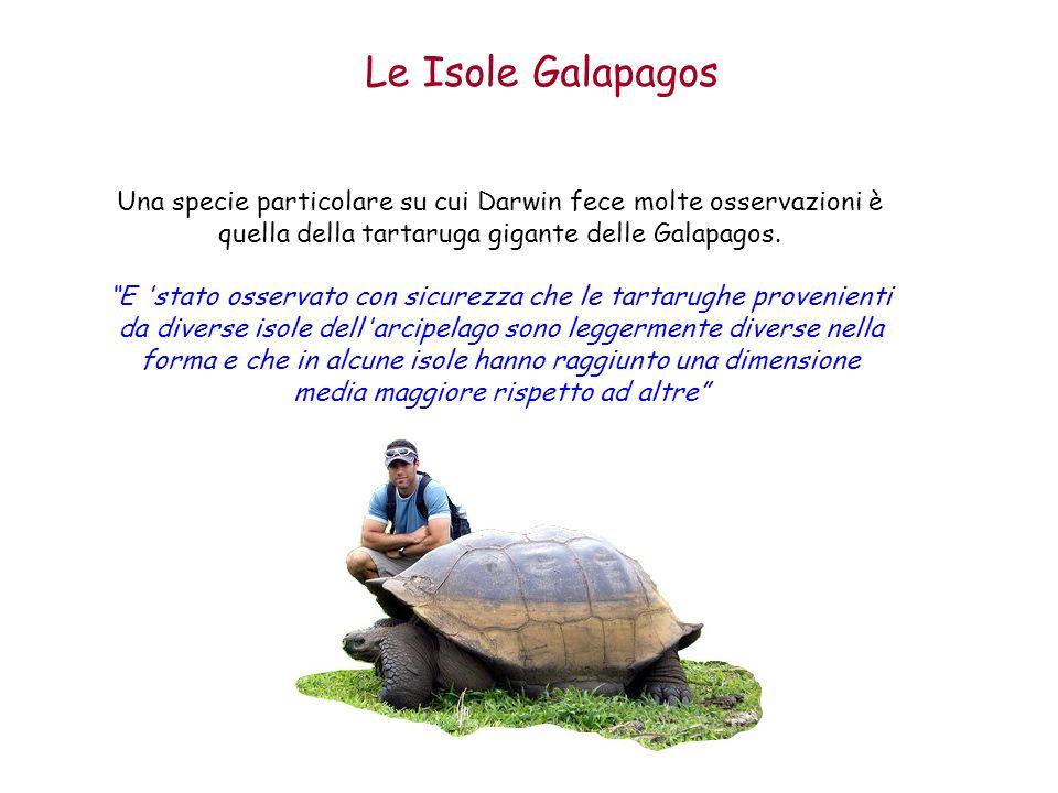 Le Isole Galapagos Una specie particolare su cui Darwin fece molte osservazioni è quella della tartaruga gigante delle Galapagos. E 'stato osservato c