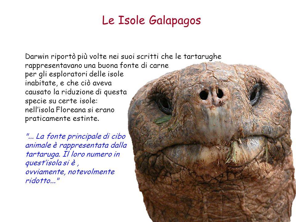 Le Isole Galapagos Darwin riportò più volte nei suoi scritti che le tartarughe rappresentavano una buona fonte di carne per gli esploratori delle isol