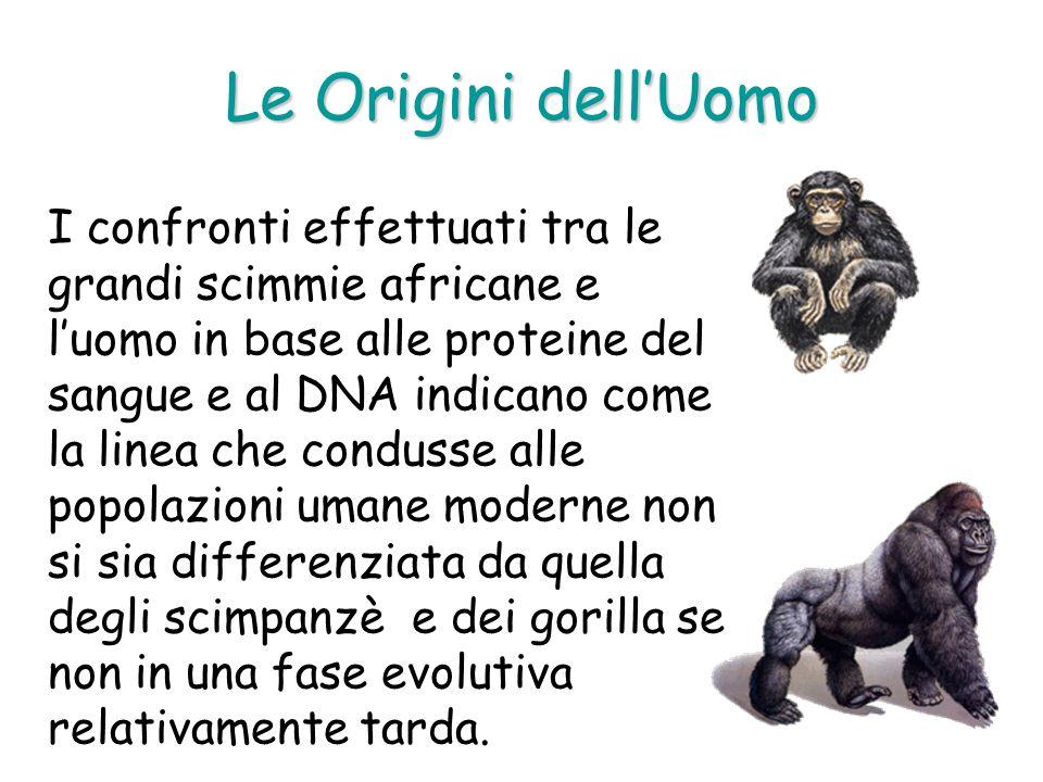 Le Origini dellUomo I confronti effettuati tra le grandi scimmie africane e luomo in base alle proteine del sangue e al DNA indicano come la linea che